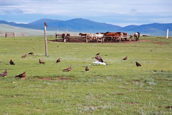 mongolski step