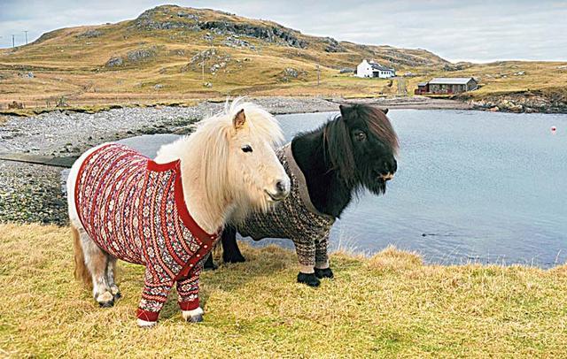Fair Isle szwetry